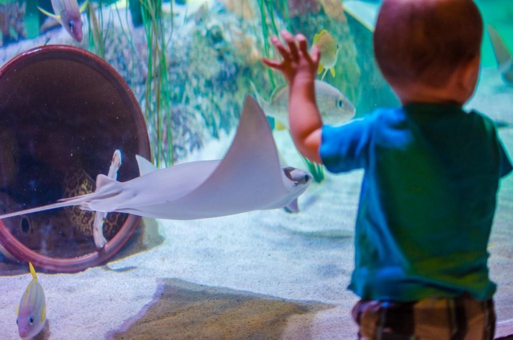 aquarium05